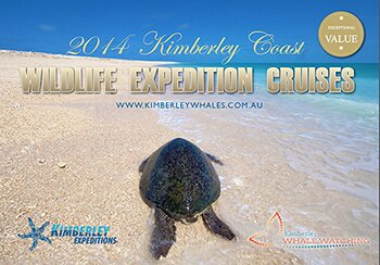 Whale watching expedition cruises on the Kimberley coast