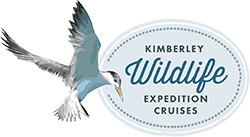 Kimberley Whale Watching  - wildlife tours from Broome, Western Australia